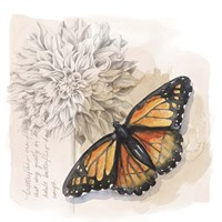 Shadow Box Butterfly I Fine-Art Print