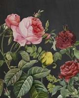 Redoute's Bouquet I Fine-Art Print