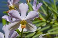 Jenny's Orchid Garden 1, Darwin, Australia Fine-Art Print