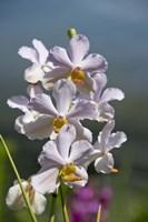 Jenny's Orchid Garden 3, Darwin, Australia Fine-Art Print