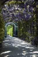 Wisteria Arbor In Garden, Austria, Vienna, Schonbrunn Palace Fine-Art Print