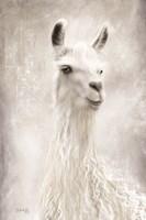Lulu the Llama Up Close Fine-Art Print