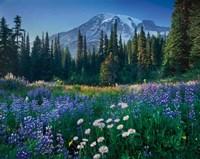 Mount Rainier Fine-Art Print