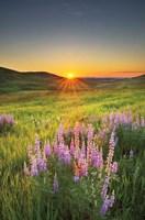 Prairie Sunrise Fine-Art Print