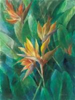 Bird of Paradise II Fine-Art Print