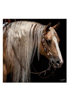 Platinum in Bridle Fine-Art Print