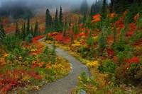 Foggy Trail, Mt. Rainier Fine-Art Print