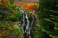 Myrtle Creek, Mt. Rainier Fine-Art Print
