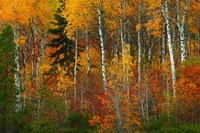 Wenatchee National Forest, WA Fine-Art Print