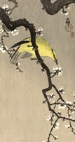 Chinese Wielewaal on Plum Blossom Branch, 1900-1910 Fine-Art Print