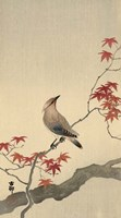 Japanese Waxwing on Maple, 1900-1936 Fine-Art Print