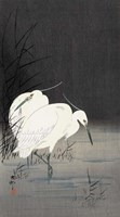 Two Egrets in the Reeds, 1900-1930 Fine-Art Print