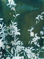 Dark Garden Fine-Art Print