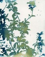 Shadow Floral Fine-Art Print
