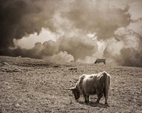 Scottish Highland Cattle No. 1 Fine-Art Print