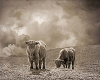 Scottish Highland Cattle No. 2 Fine-Art Print