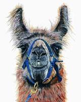 Dalai Llama Fine-Art Print