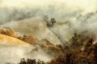 Awakening Fields Fine-Art Print