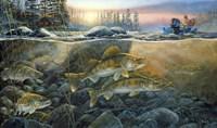 Walleyes On The Rocks Fine-Art Print