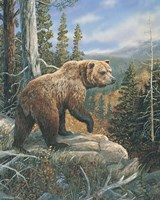 Grizzlies Domain 2 Fine-Art Print