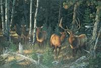 Wilderness Whispers Fine-Art Print