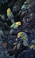 Yellow Headed Amazons Fine-Art Print