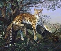 Leopard's Domain Fine-Art Print