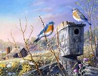 Old Homestead Bluebirds Fine-Art Print