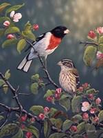 Apple Blossom Time Fine-Art Print