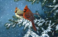 Sharing The Season - Cardinals Fine-Art Print
