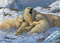 Snow Bears Fine-Art Print
