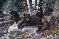 Wisdom Of The Woods Fine-Art Print