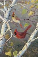 Cardinals In Birch Fine-Art Print
