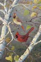 Cardinals In Birch Fine-Art Print