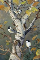 Chickadees In Birch Fine-Art Print