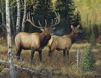 Singing Wilderness Fine-Art Print