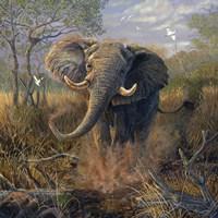 Angry Tusker Fine-Art Print