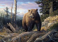 Mountain Winds Grizzly Fine-Art Print