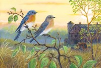 True Blue Bluebird Fine-Art Print