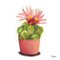 Cactus Flowers I Fine-Art Print