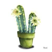 Cactus Flowers II Fine-Art Print