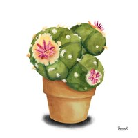 Cactus Flowers VII Fine-Art Print