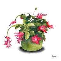 Cactus Flowers VIII Fine-Art Print