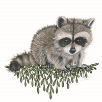 Baby Raccoon Fine-Art Print