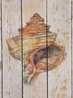 Seashell IV Fine-Art Print