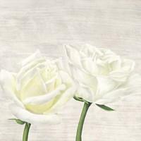 Classic Roses II Fine-Art Print
