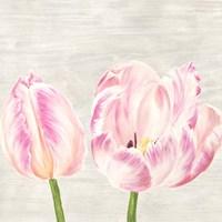 Classic Tulips I Fine-Art Print