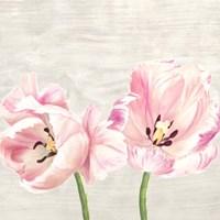 Classic Tulips II Fine-Art Print