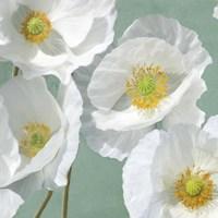 Poppies on Mint I Fine-Art Print