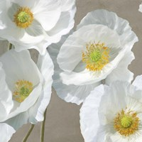 Poppies on Taupe I Fine-Art Print